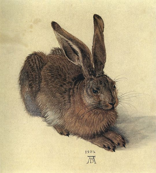 Albrecht Dürer, Young Hare, 1502, watercolor and body color, Albertina, Vienna