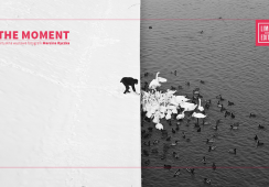 """Pierwsza wirtualna wystawa fotografii Marcina Ryczka """"The Moment"""" w Limited Edition"""