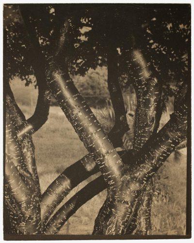 Georgia O'Keeffe i Alfred Stieglitz